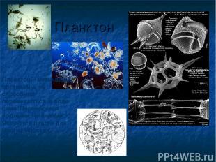 Планктон Планктон – мельчайшие организмы, не способные перемещаться в воде сами.