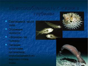 Приспособленность к жизни в глубинах Светящиеся части тела Огромные челюсти «Фон