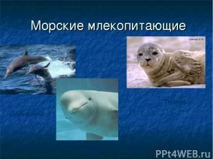 Морские млекопитающие Дельфины Тюлень