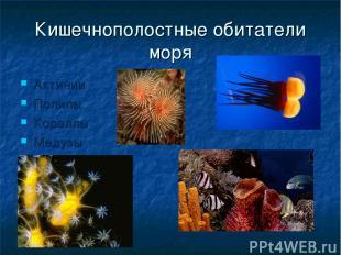 Кишечнополостные обитатели моря Актинии Полипы Кораллы Медузы