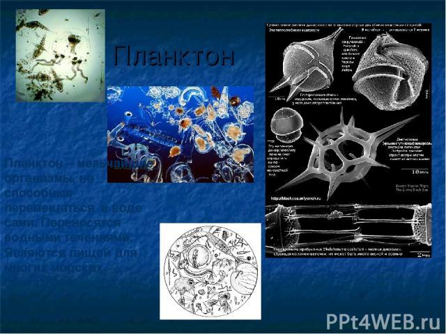Планктон Планктон – мельчайшие организмы, не способные перемещаться в воде сами. Переносятся водными течениями. Являются пищей для многих морских обитателей.