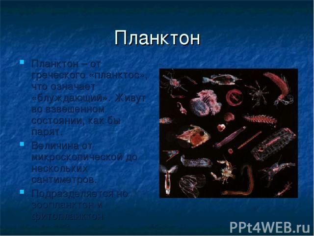 Планктон Планктон – от греческого «планктос», что означает «блуждающий». Живут во взвешенном состоянии, как бы парят. Величина от микроскопической до нескольких сантиметров. Подразделяется но зоопланктон и фитопланктон