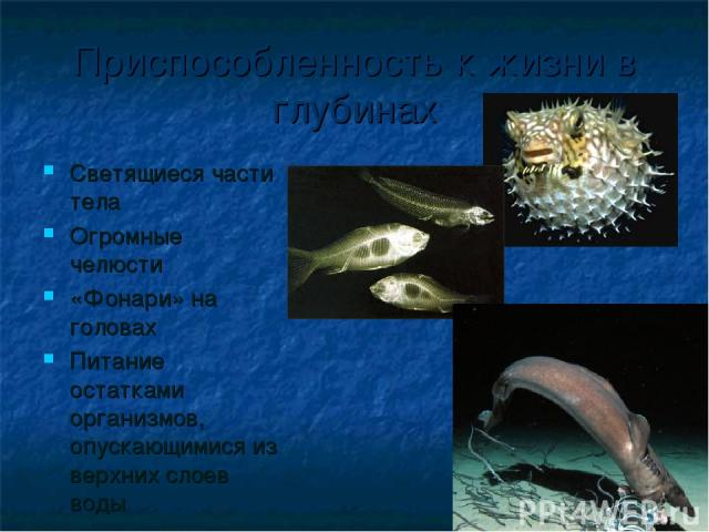 Приспособленность к жизни в глубинах Светящиеся части тела Огромные челюсти «Фонари» на головах Питание остатками организмов, опускающимися из верхних слоев воды