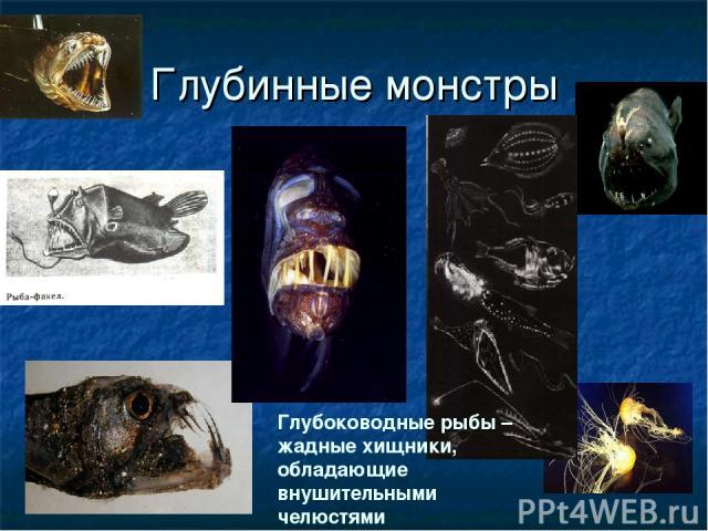 Глубинные монстры Глубоководные рыбы – жадные хищники, обладающие внушительными челюстями
