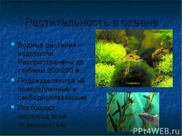 Растительность в океане Водные растения – водоросли. Распространены до глубины 200-250 м. Подразделяются на прикрепленные и свободноплавающие Поглощают кислород всей поверхностью