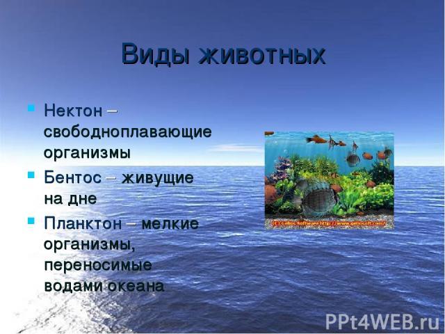 Виды животных Нектон – свободноплавающие организмы Бентос – живущие на дне Планктон – мелкие организмы, переносимые водами океана