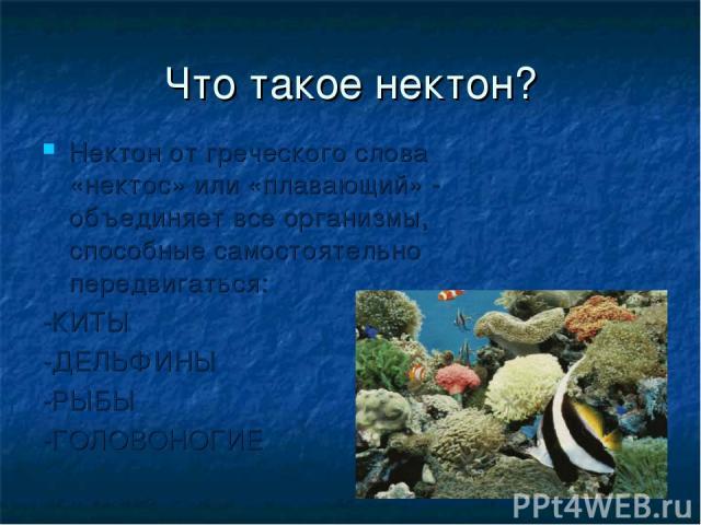 Что такое нектон? Нектон от греческого слова «нектос» или «плавающий» - объединяет все организмы, способные самостоятельно передвигаться: -КИТЫ -ДЕЛЬФИНЫ -РЫБЫ -ГОЛОВОНОГИЕ
