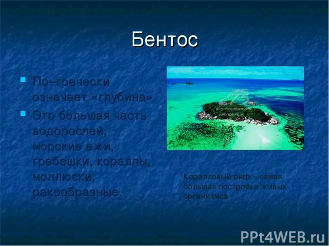 Бентос По–гречески означает «глубина» Это большая часть водорослей, морские ежи, гребешки, кораллы, моллюски, ракообразные. Коралловый риф – самая большая постройка живых организмов