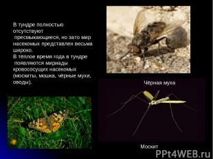 В тундре полностью отсутствуют пресмыкающиеся, но зато мир насекомых представлен