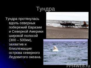 Тундра Тундра протянулась вдоль северных побережий Евразии и Северной Америки ши