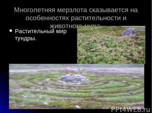 Многолетняя мерзлота сказывается на особенностях растительности и животного мира