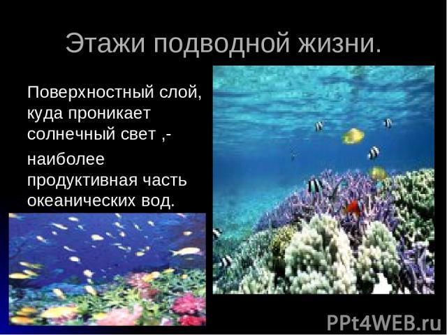 Этажи подводной жизни. Поверхностный слой, куда проникает солнечный свет ,- наиболее продуктивная часть океанических вод.