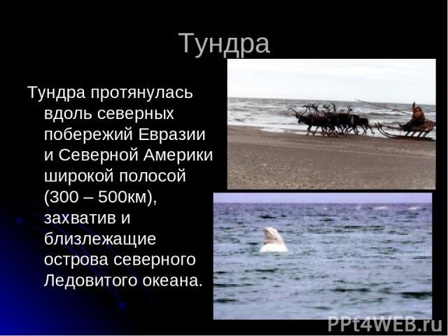 Тундра Тундра протянулась вдоль северных побережий Евразии и Северной Америки широкой полосой (300 – 500км), захватив и близлежащие острова северного Ледовитого океана.