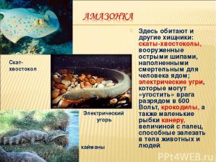 Здесь обитают и другие хищники: скаты-хвостоколы, вооруженные острыми шипами, на
