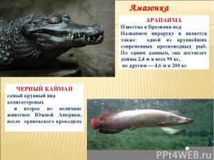 ЧЕРНЫЙ КАЙМАН самый крупный вид аллигаторовых и второе по величине животное Южно