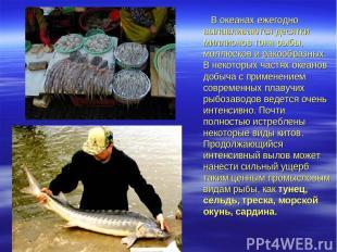 В океанах ежегодно вылавливаются десятки миллионов тонн рыбы, моллюсков и ракооб