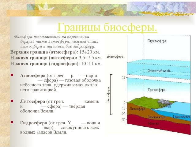 Границы биосферы. Биосфера располагается на пересечении верхней части литосферы, нижней части атмосферы и занимает всю гидросферу. Верхняя граница (атмосфера): 15÷20 км. Нижняя граница (литосфера): 3,5÷7,5 км. Нижняя граница (гидросфера): 10÷11 км. …