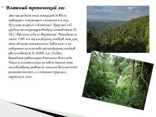 Влажный тропический лес- Это природная зона, тянущаяся вдоль экватора с некотор