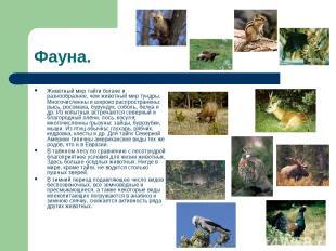Фауна. Животный мир тайги богаче и разнообразнее, чем животный мир тундры. Много