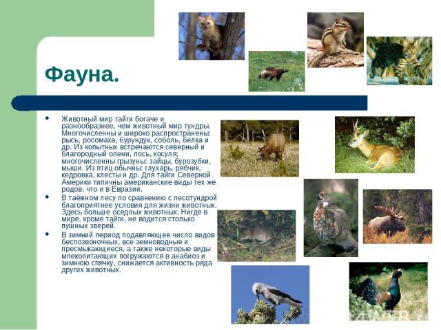 Фауна. Животный мир тайги богаче и разнообразнее, чем животный мир тундры. Многочисленны и широко распространены: рысь, росомаха, бурундук, соболь, белка и др. Из копытных встречаются северный и благородный олени, лось, косуля; многочисленны грызуны…