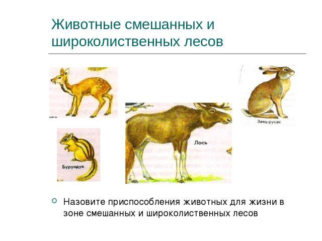 Животные смешанных и широколиственных лесов Назовите приспособления животных для жизни в зоне смешанных и широколиственных лесов