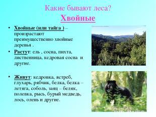 Какие бывают леса? Хвойные Хвойные (или тайга ) – произрастают преимущественно х