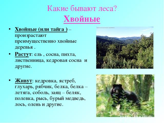 Какие бывают леса? Хвойные Хвойные (или тайга ) – произрастают преимущественно хвойные деревья . Растут: ель , сосна, пихта, лиственница, кедровая сосна и другие. Живут: кедровка, ястреб, глухарь, рябчик, белка, белка – летяга, соболь, заяц – беляк,…