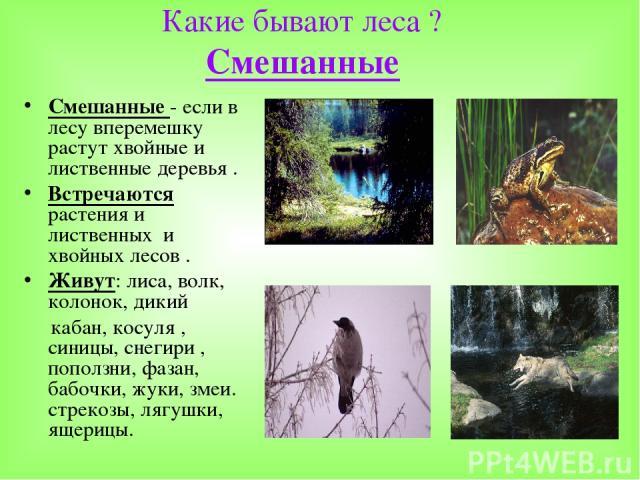 Какие бывают леса ? Смешанные Смешанные - если в лесу вперемешку растут хвойные и лиственные деревья . Встречаются растения и лиственных и хвойных лесов . Живут: лиса, волк, колонок, дикий кабан, косуля , синицы, снегири , поползни, фазан, бабочки, …