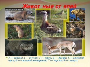 Животные степей 1 — сайгак; 2 — суслик; 3 — сурок; 4 — дрофа; 5 — степной орел;