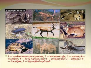 Животные пустынь 1 — среднеазиатская черепаха; 2 — песчаная эфа; 3 — агама; 4 —