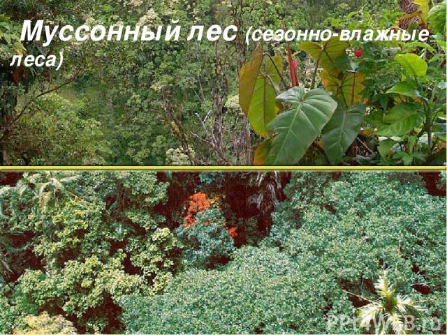 Муссонный лес (сезонно-влажные леса)