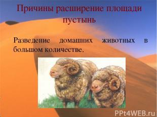 Причины расширение площади пустынь Разведение домашних животных в большом количе