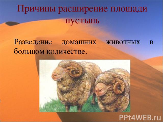 Причины расширение площади пустынь Разведение домашних животных в большом количестве.
