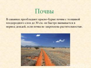 Почвы В саваннах преобладают красно-бурые почвы с толщиной плодородного слоя до