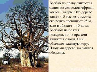 Баобаб по праву считается одним из символов Африки южнее Сахары. Это дерево живё