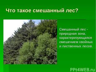 Что такое смешанный лес? Смешанный лес - природная зона, характеризующаяся смеше