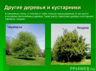 Другие деревья и кустарники Черёмуха Лещина В смешанных лесах, в отличие от тайг