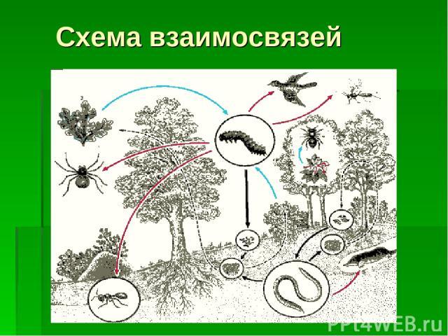 Схема взаимосвязей