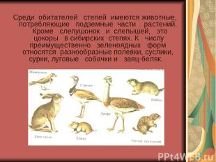 Среди обитателей степей имеются животные, потребляющие подземные части растений.