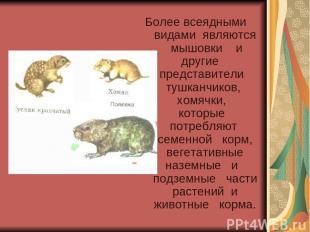 Более всеядными видами являются мышовки и другие представители тушканчиков, хомя