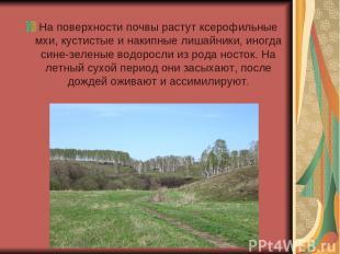 На поверхности почвы растут ксерофильные мхи, кустистые и накипные лишайники, ин