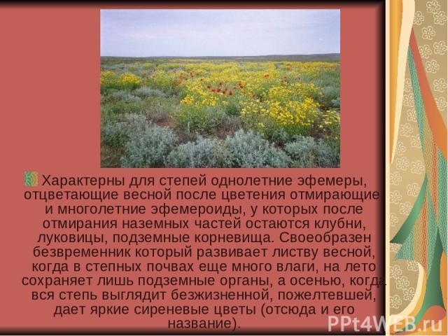 Характерны для степей однолетние эфемеры, отцветающие весной после цветения отмирающие, и многолетние эфемероиды, у которых после отмирания наземных частей остаются клубни, луковицы, подземные корневища. Своеобразен безвременник который развивает ли…