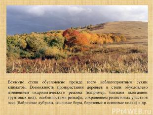 Безлесие степи обусловлено прежде всего неблагоприятным сухим климатом. Возможно