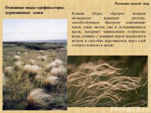Растительный мир Основные виды-эдификаторы: дерновинные злаки Ковыли (Stipa) обр