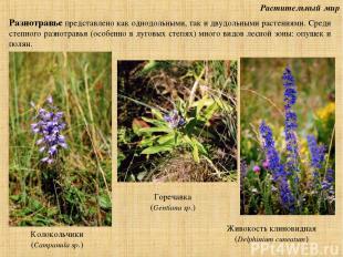 Растительный мир Разнотравье представлено как однодольными, так и двудольными ра