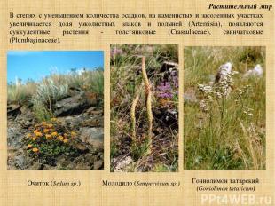 Растительный мир В степях с уменьшением количества осадков, на каменистых и засо
