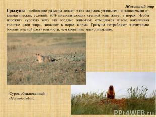 Животный мир Грызуны – небольшие размеры делают этих зверьков уязвимыми и зависи