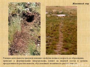 Животный мир Роющая деятельность грызунов изменяет свойства почвы и скорость ее