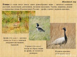 Животный мир Дрофа (Otis tarda ) – крупная птица (до 16 кг) с типичной покровите