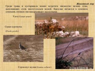 Животный мир Среди травы и кустарников можно встретить множество мелких птиц, на